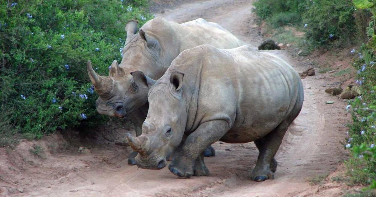 Passer des moments inoubliables en faisant un safari en Afrique